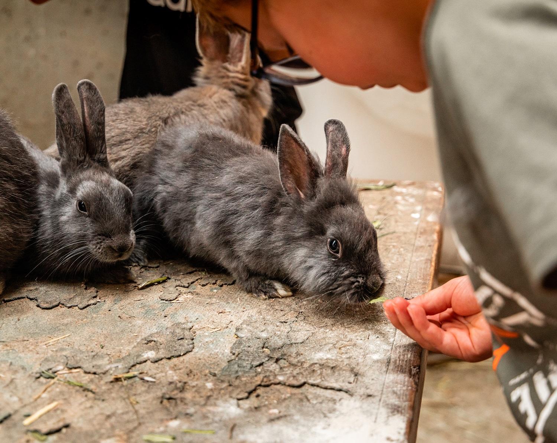 lapins-les-montagnards_OT-Combloux