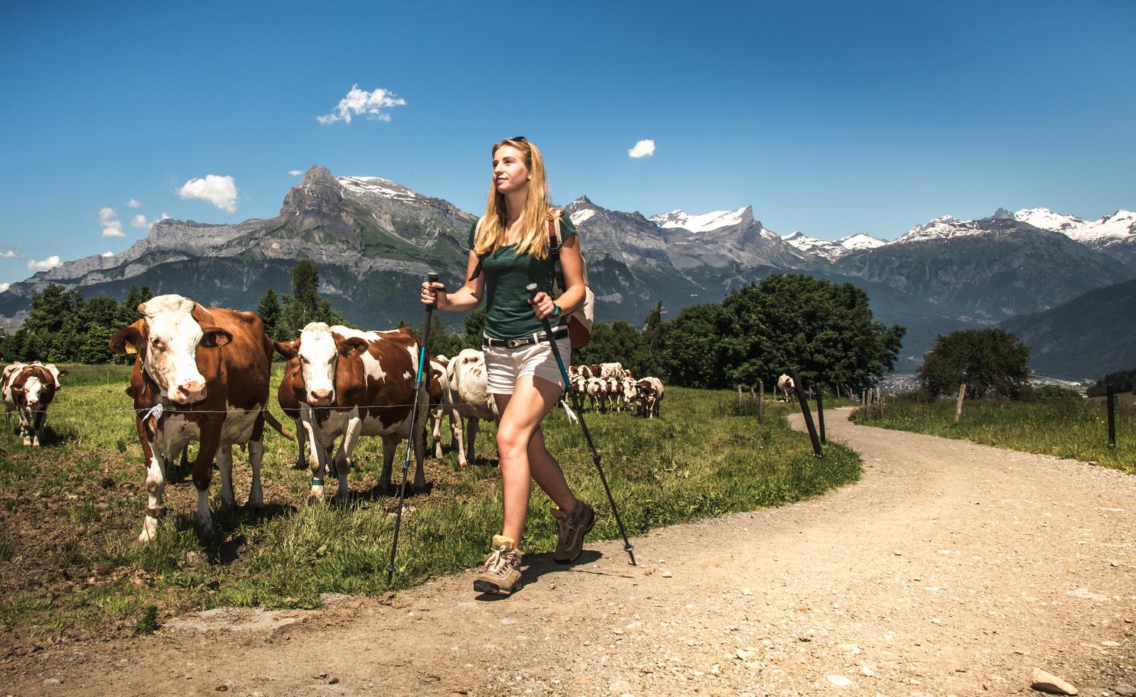 Rando champs vaches©Soren_Rickards